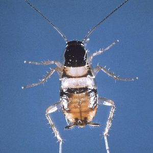 Freaky Bugs Archive Reliable Pest Solutions