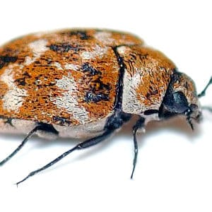 Freaky Bugs Archive - Reliable Pest Solutions